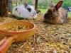 i coniglietti
