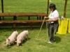 Vittoria a spasso con i maialini